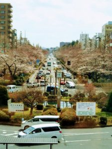 18-0324桜③