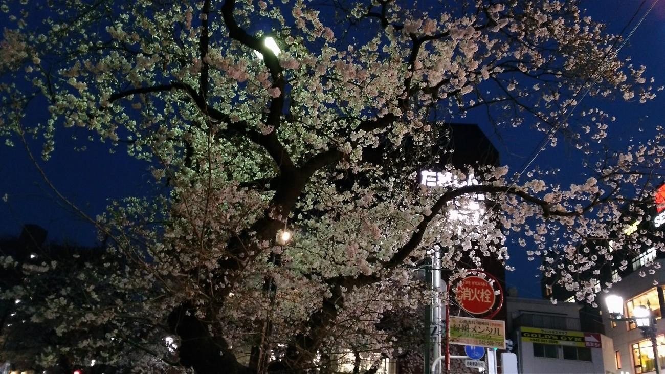 190327_国立駅前夜桜①