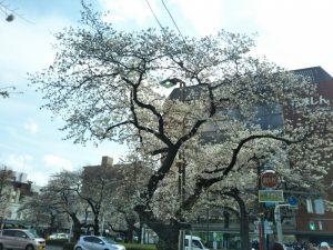 18-0324桜②