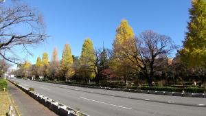 DSC_0223-秋の国立